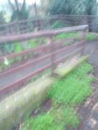 Curva della rampa (scusate la foto mossa). La vegetazione e' presente costantemente.
